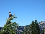 Bird at Crater Lake by KingIan, Photography->Birds gallery