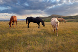 Heart River Horses and the Storm by Nikoneer, photography->manipulation gallery
