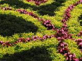 Garden Curves by Hottrockin, Photography->Gardens gallery