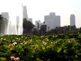 Lotus Field by bikolnon, Photography->Landscape gallery