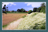 Zeeland In Bloom 03, Flowering Dike by corngrowth, Photography->Landscape gallery
