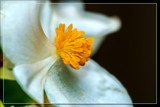 Foofy Friday 'Heart' by corngrowth, photography->macro gallery