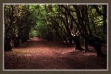 Walcheren Country Roads & Paths 11 by corngrowth, Photography->Landscape gallery
