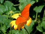 last blast by tee, photography->butterflies gallery