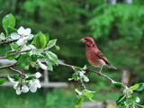 Birds & Blossoms 3 by muggsy, Photography->Birds gallery