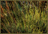 Fall Grasses by trixxie17, photography->nature gallery