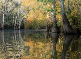 Fall On The Bayou by PatAndre, Photography->Landscape gallery