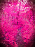 Pink Wonderland by lokigrl616, abstract->Surrealism gallery