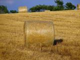 Ontario Golden Farmland by dwdharvey, Photography->Landscape gallery