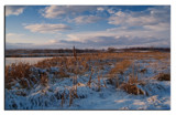 Winter Reeds by slybri, Photography->Landscape gallery