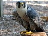 Warbird by Hottrockin, Photography->Birds gallery