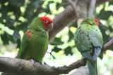 Parrots by bif000, Photography->Birds gallery