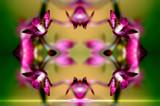 Kolydoskope 6 by Samatar, Photography->Manipulation gallery