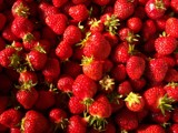 Strawberry Patch 2 by neostrategos, Photography->Food/Drink gallery