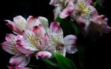 Vased by Pixleslie, Photography->Flowers gallery