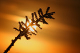 Frozen Sunset II by prisoner5307, Photography->Sunset/Rise gallery