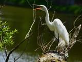 Dancin' n' Singin' by legster69, Photography->Birds gallery