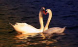 A Love-ly Pair by tigger3, photography->manipulation gallery