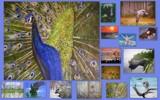 ladyred, eggray, garrettparkinson,paulgeritsen, yenom + me by rotcivski, illustrations->traditional gallery