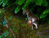 Secret Squirrel by biffobear, photography->animals gallery