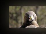Talons XXI by Hottrockin, Photography->Birds gallery