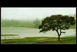 Tree of life by Ravindra077, Photography->Landscape gallery