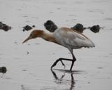 !!! Inspector !!! by bijantalukdar, photography->birds gallery