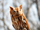 Talons V by Hottrockin, Photography->Birds gallery