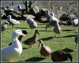 Mixed Company by ironjoe, Photography->Birds gallery