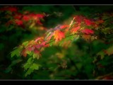 As the Seasons Change by photoimagery, Photography->Nature gallery