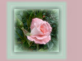 For Marilynjane by LynEve, Photography->Flowers gallery
