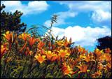 South Dakota Winds!   1 by marilynjane, Photography->Landscape gallery
