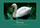 Swan Poster by LynEve, photography->birds gallery