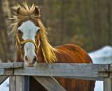 My Mighty Mane by slyyogi, Photography->Animals gallery
