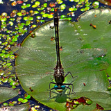 Bug Eyed by tigger3, photography->insects/spiders gallery