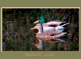 Mallard Couple by gerryp, Photography->Birds gallery