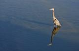 Sunny Side Up by Jimbobedsel, photography->birds gallery