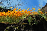 Poppyscapade by Jahlela, Photography->Flowers gallery