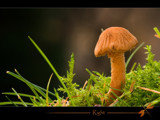 right by kodo34, Photography->Mushrooms gallery