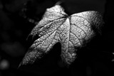 Turning Over A New Leaf by chadwik05, photography->nature gallery