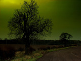 Tree Highlights by wingnut4, Photography->Manipulation gallery
