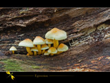 egression by kodo34, Photography->Mushrooms gallery