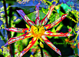 Flower Power by tigger3, photography->manipulation gallery