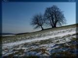 Tree's 1 by Larser, Photography->Landscape gallery