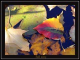 Fall Leaves by caswds41, photography->still life gallery