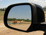 Looking Back by Jimbobedsel, photography->animals gallery