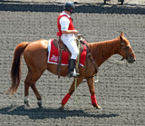 Arlington Racecourse 8 - The Outrider by trixxie17, photography->animals gallery