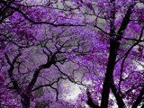 Purple Spring by jojomercury, Photography->Manipulation gallery