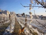 Winter in ALSACE by Kokkari, Photography->Landscape gallery