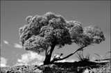 Tree . . . by LynEve, photography->nature gallery
